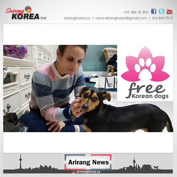 한국 유기견 입양 이동봉사자 모집